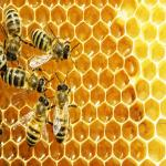 Eco-Friendly Materials Are the Way to Go for Your Honey Product Labels